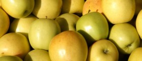 green apples in the sunshine