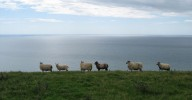 six sheep standing on the edge of a cliff