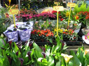flower market stall in Delft