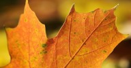 close up of brown autumn leaf to illustrate feeling SAD if you have seasonal affective disorder