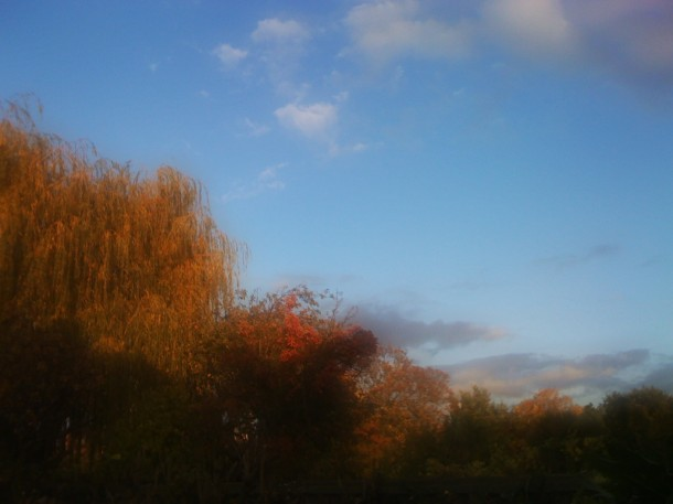 view of autumn colours from my back garden