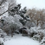 My back garden covered in snow