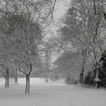 Snowy tree-lined avenue in the park