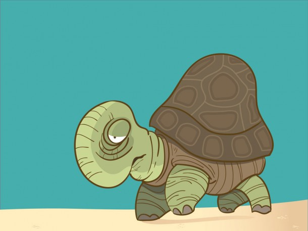 illustration of a tortoise