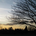 Beautiful winter tree branches silhouetted against a sunset sky