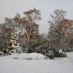 the American Garden in Dulwich Park covered in snow