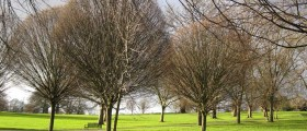 Winter trees to demonstrate low libido in menopausal women
